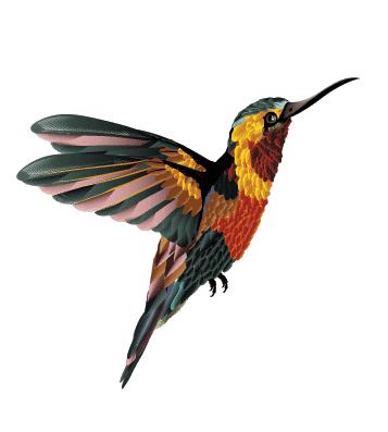 Переводная татуирвка колибри