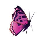 Тату наклейка «Розовая бабочка»