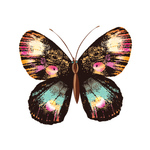 Переводилка «Бабочка»