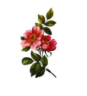 """Переводная татуировка """"Цветок яблони"""""""