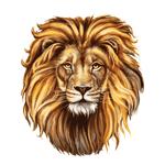 Переводная тату «Морда льва»
