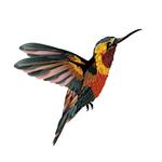 Переводная колибри